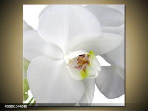 Moderný obraz o rozmere 40x40 cm s motívom kvetov