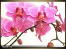 Moderný obraz o rozmere 70x50 cm s motívom kvetov